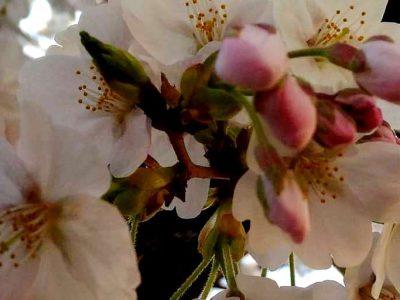 【小さな話題】春がきた(4月のあそび風景から)