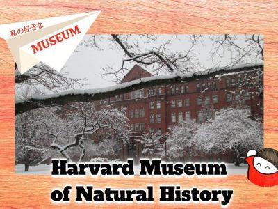 私の好きな世界のMuseum:19ハーバード大学自然史博物館